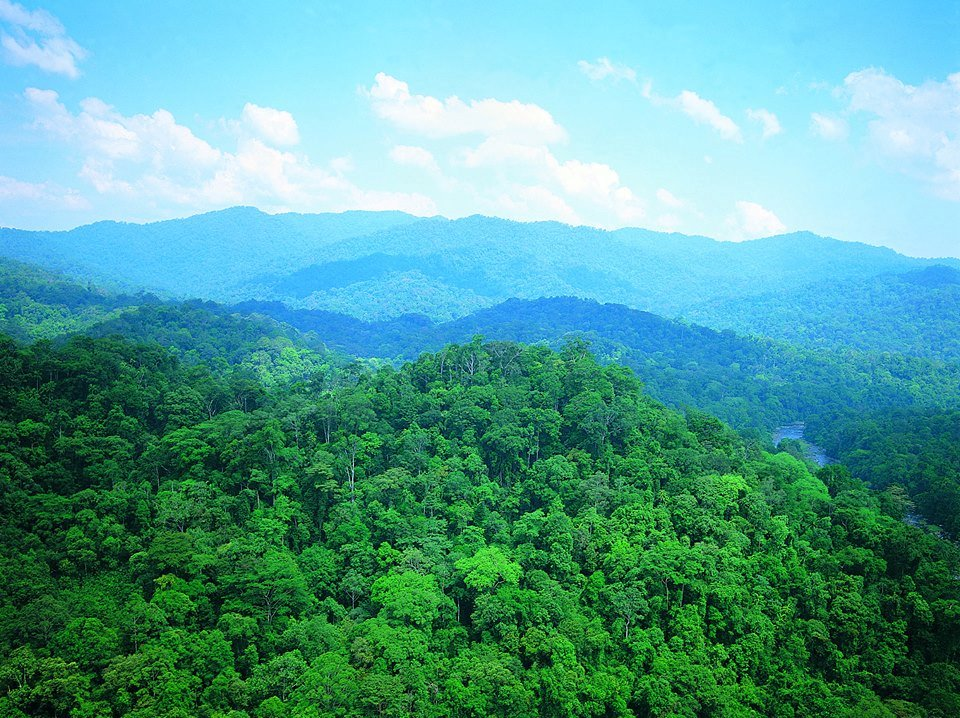 MTCC WELCOMES MOVE FOR MANDATORY FOREST CERTIFICATION IN SARAWAK