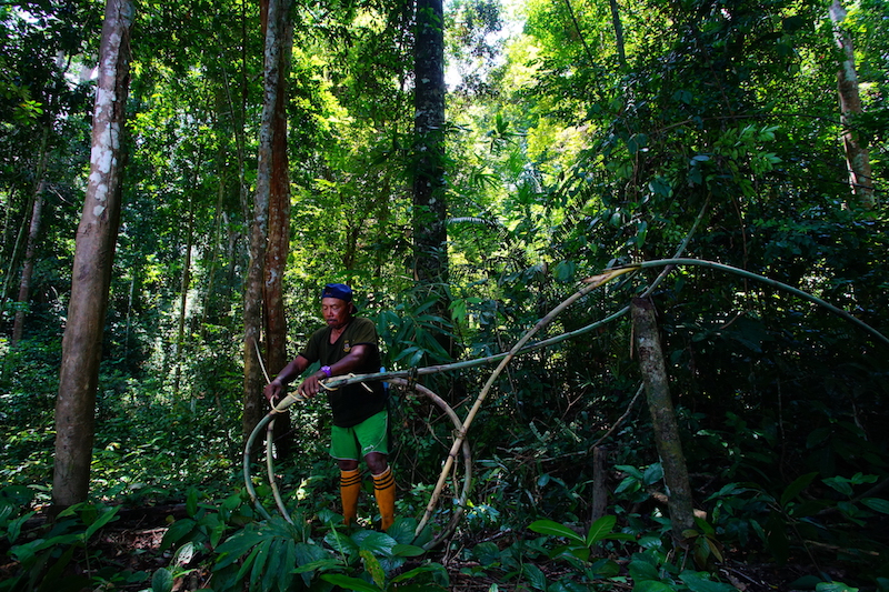 GOING BEYOND FORESTS: PEFC TO OPEN CERTIFICATION TO FARMERS AND AGROFORESTRY- GIVE YOUR FEEDBACK NOW!